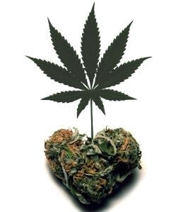 padres marihuana