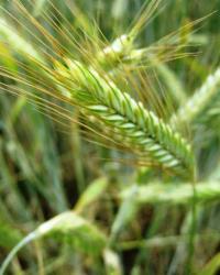 Cientifica deja el veganismo porque sufren las plantas